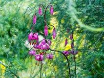 Красивые цветки лилии в высокорослой траве Стоковые Фото