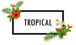 Красивые цветки и листья лето предпосылки тропическое Стоковая Фотография RF