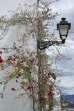Красивые цветки и фонарик Стоковые Фото