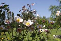 Красивые цветки кукушки Стоковая Фотография RF