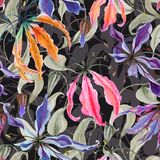 Красивые цветки лилии gloriosa с взбираться выходят на темную предпосылку флористическая картина безшовная самана коррекций высок Стоковые Фотографии RF