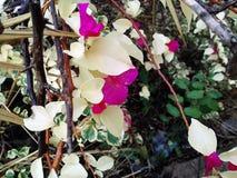 Красивые цветки, между хаосом затерянности стоковое изображение