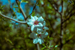 Красивые цветки на весне дерева Стоковое Изображение