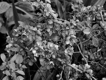 Красивые цветки на ветви дерева на черно-белом фото Стоковое Изображение RF