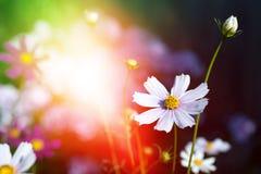 Красивые цветки на волшебной предпосылке сада тонизировано стоковое фото