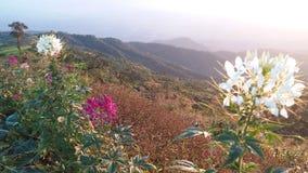 Красивые цветки на горе в утре стоковое изображение rf