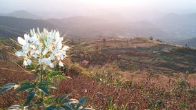 Красивые цветки на горе в утре стоковое изображение