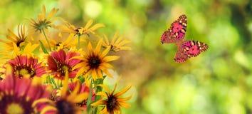 Красивые цветки на зеленой предпосылке Стоковое Изображение RF