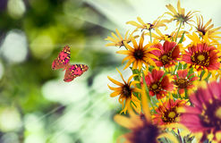 Красивые цветки на зеленой предпосылке Стоковая Фотография