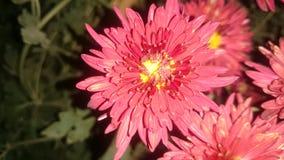 Красивые цветки на ноча Стоковые Фото