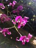 Красивые цветки орхидеи под солнечным светом Стоковые Фото