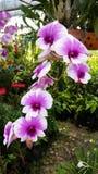 Красивые цветки достойные вас одно Стоковые Фото