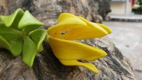 Красивые цветки достойные вас одно Стоковая Фотография