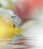 Красивые цветки отразили в воде, концепции курорта Спокойная абстрактная фотография искусства крупного плана Флористический дизай Стоковое фото RF