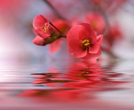 Красивые цветки отразили в воде, концепции курорта Стоковые Фотографии RF