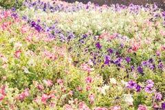 Красивые цветки предпосылка, конец-вверх красивого muti-цвета f Стоковое фото RF