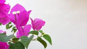 Красивые цветки светят в мире мечт реальных стоковые изображения