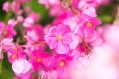 Красивые цветки сделанные с красочными фильтрами Стоковые Изображения