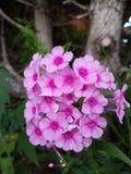Красивые цветки сезона лета стоковое изображение rf