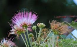 Красивые цветки символизируют красивую жизнь, и красивая жизнь неотделима от красивых цветков стоковая фотография rf
