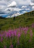 Красивые цветки сирени в поле стоковые изображения