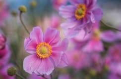 Красивые цветки сирени в поле стоковое изображение rf