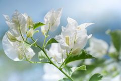 Красивые цветки сделанные с цветными поглотителями Стоковое Изображение