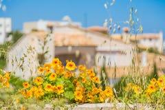 Красивые цветки с запачканными частными домами на предпосылке Стоковые Изображения RF