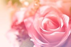 Красивые цветки с мягким цветом фокуса фильтровали предпосылку Стоковая Фотография