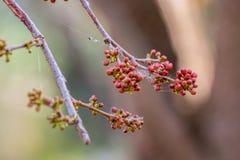Красивые цветки с паутиной Стоковые Изображения