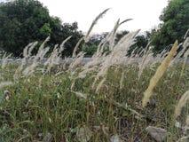 Красивые цветки травы в природе Стоковые Изображения RF