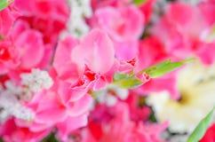 Красивые цветки для валентинок и сцены свадьбы Стоковое фото RF