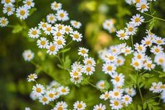 Красивые цветки для карточек и приветствий Стоковое Изображение RF