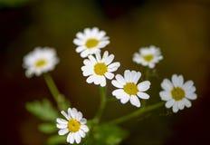 Красивые цветки для карточек и приветствий Стоковая Фотография RF