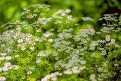 Красивые цветки для карточек и приветствий Стоковые Фотографии RF