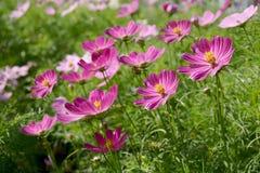 Красивые цветки Стоковые Фото