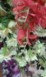 Красивые цветки Стоковое Изображение RF
