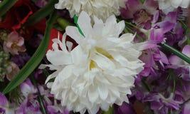 Красивые цветки Стоковое Фото