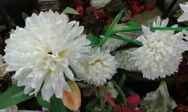 Красивые цветки Стоковая Фотография RF