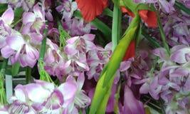 Красивые цветки Стоковая Фотография