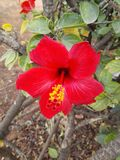 Красивые цветки byme delevery morroco Стоковая Фотография RF