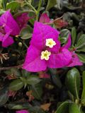 Красивые цветки byme delevery morroco Стоковые Фото