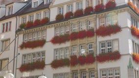 Красивые цветы на стене акции видеоматериалы