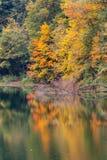 Красивые цветы осени в деревьях стоковое изображение