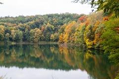 Красивые цветы осени в деревьях стоковое изображение rf