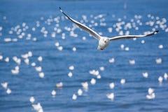 Красивые чайки Стоковое Изображение