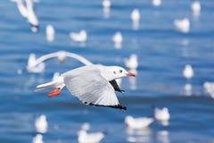 Красивые чайки Стоковые Изображения RF