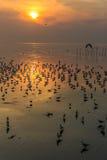 Красивые чайки sihouette летая с предпосылкой восхода солнца Стоковая Фотография