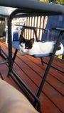 красивые черно-белые котята стоковые изображения rf