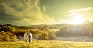 Красивые чувственные женщины с белой лошадью Стоковое Изображение RF